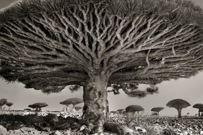 Ancient-Trees-11.jpg