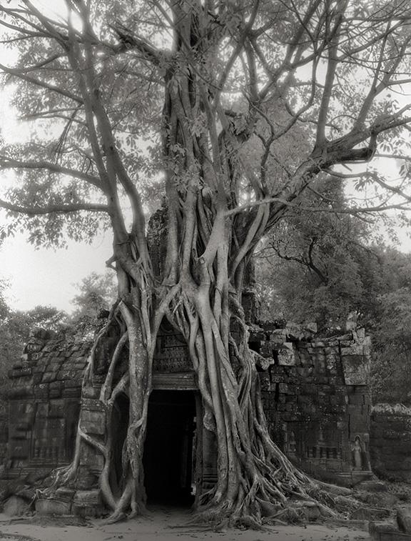 Ancient-Trees-01.jpg