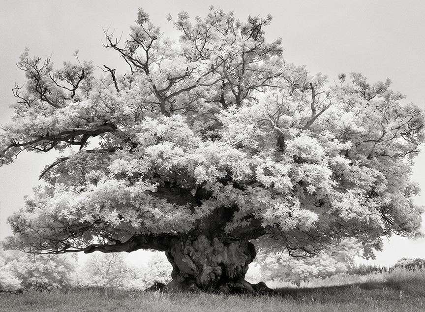 Ancient-Trees-02.jpg
