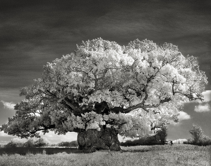 Ancient-Trees-03.jpg