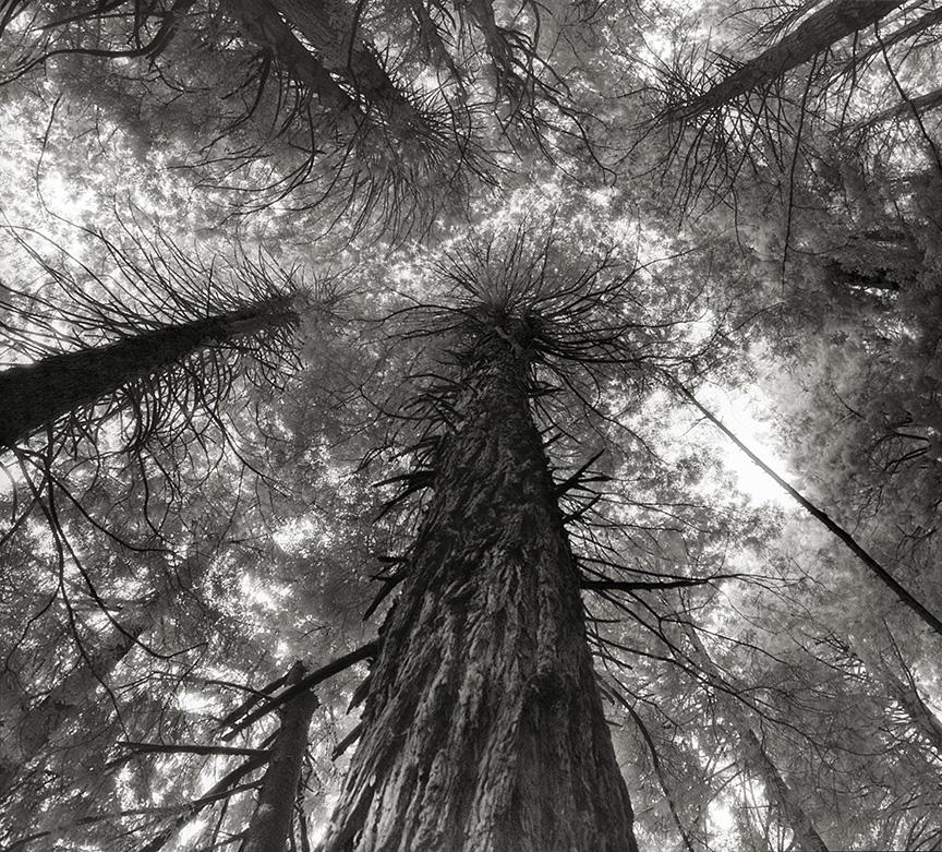 Ancient-Trees-04.jpg