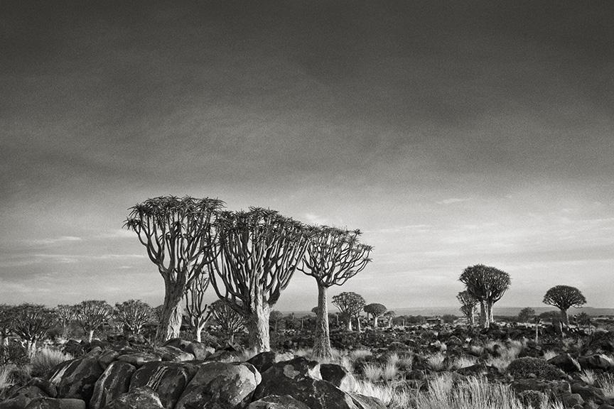 Ancient-Trees-05.jpg