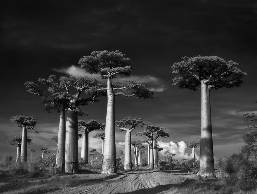 Ancient-Trees-06.jpg