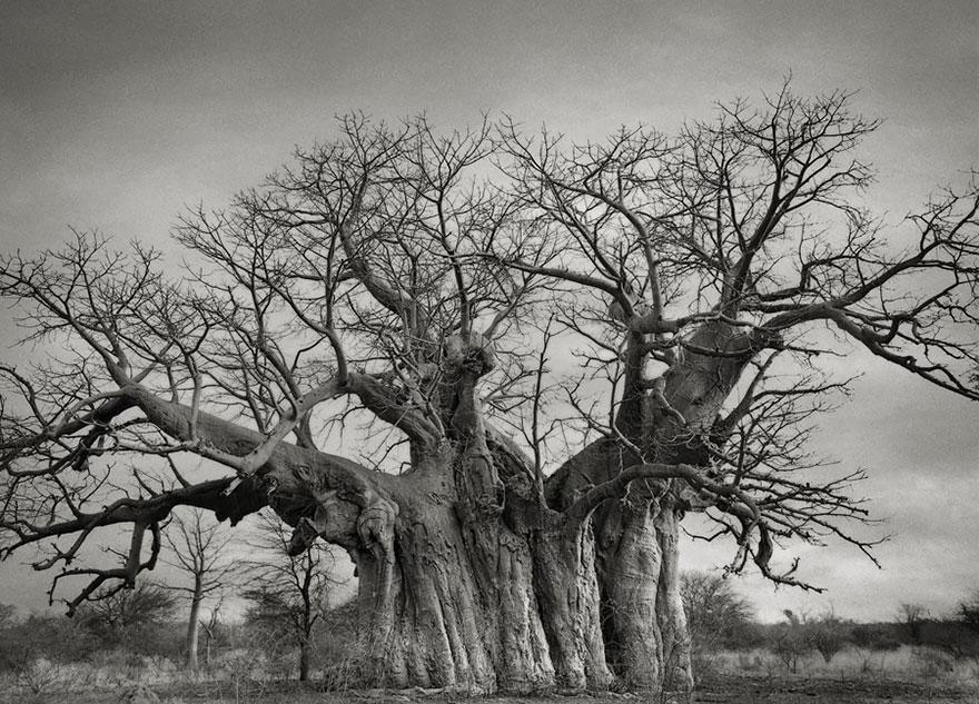 Ancient-Trees-07.jpg