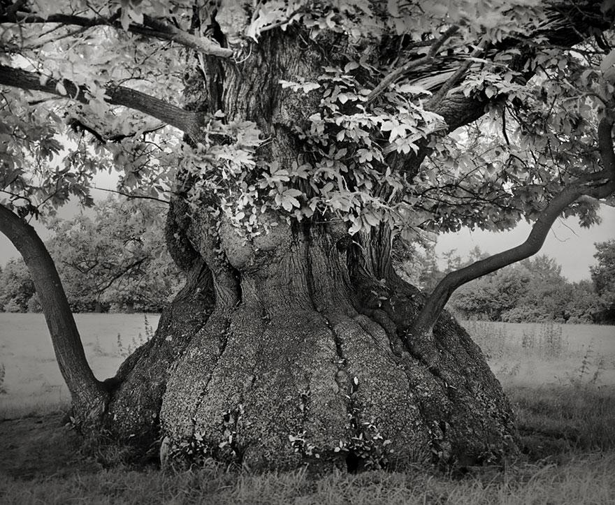 Ancient-Trees-08.jpg