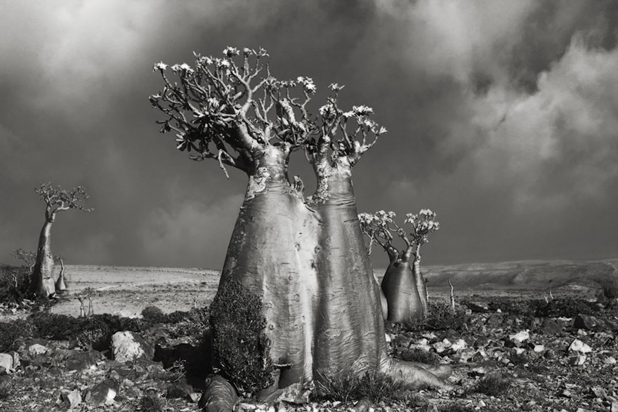Ancient-Trees-09.jpg