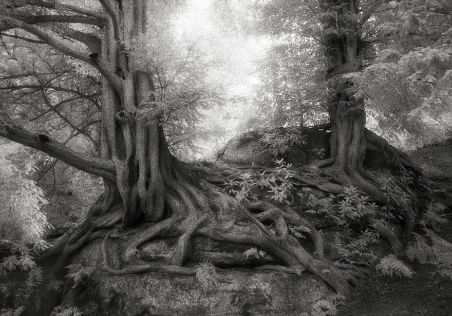 Ancient-Trees-10.jpg