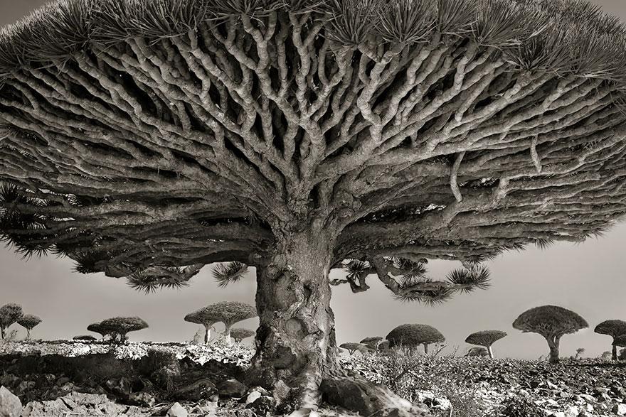 Ancient-Trees-11.jpg