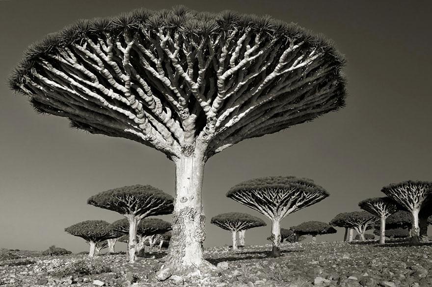 Ancient-Trees-12.jpg