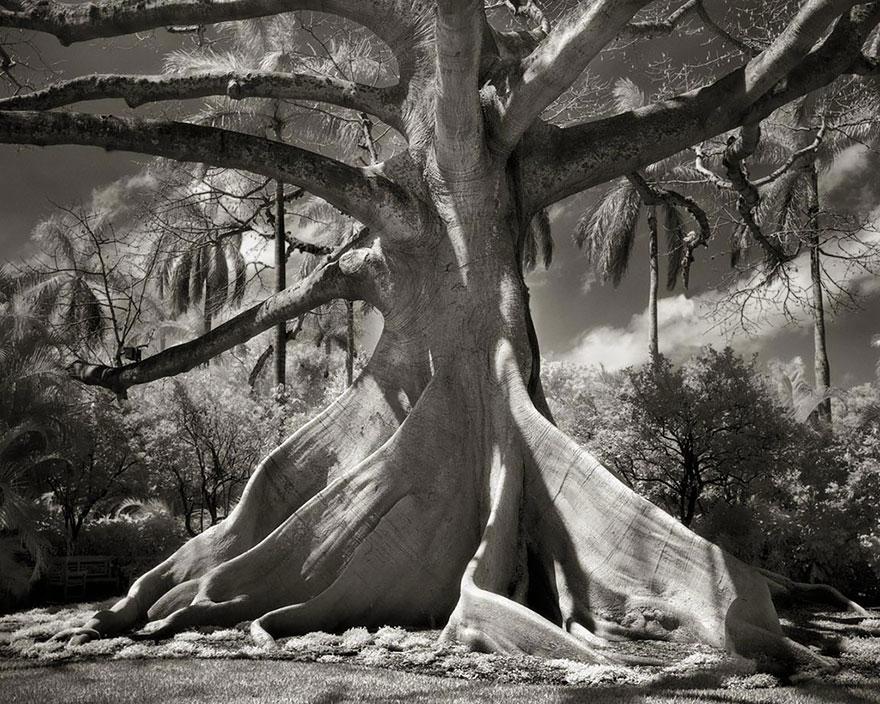 Ancient-Trees-13.jpg
