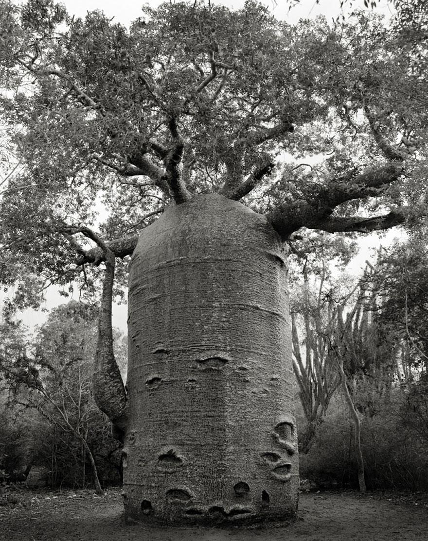 Ancient-Trees-14.jpg