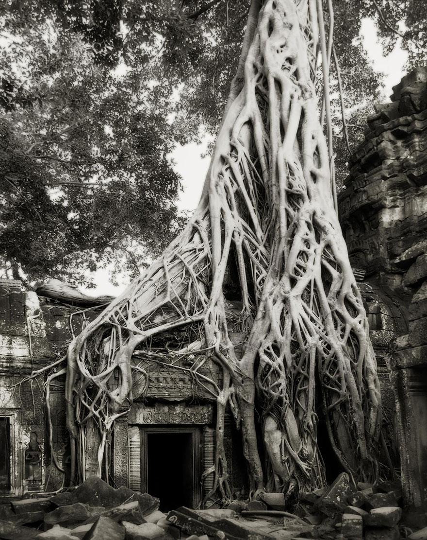 Ancient-Trees-15.jpg
