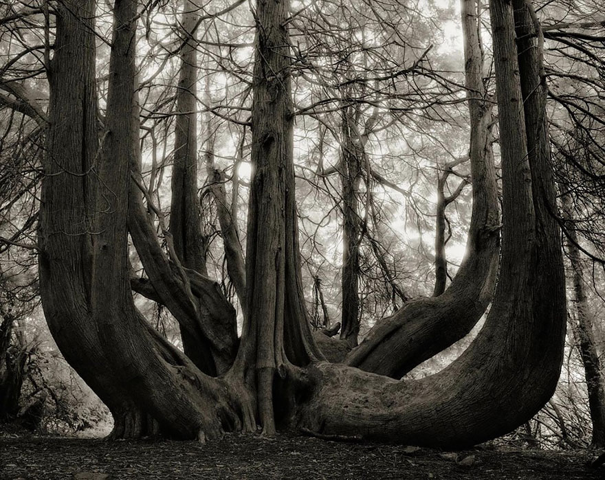Ancient-Trees-16.jpg