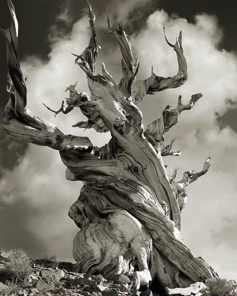 Ancient-Trees-17.jpg