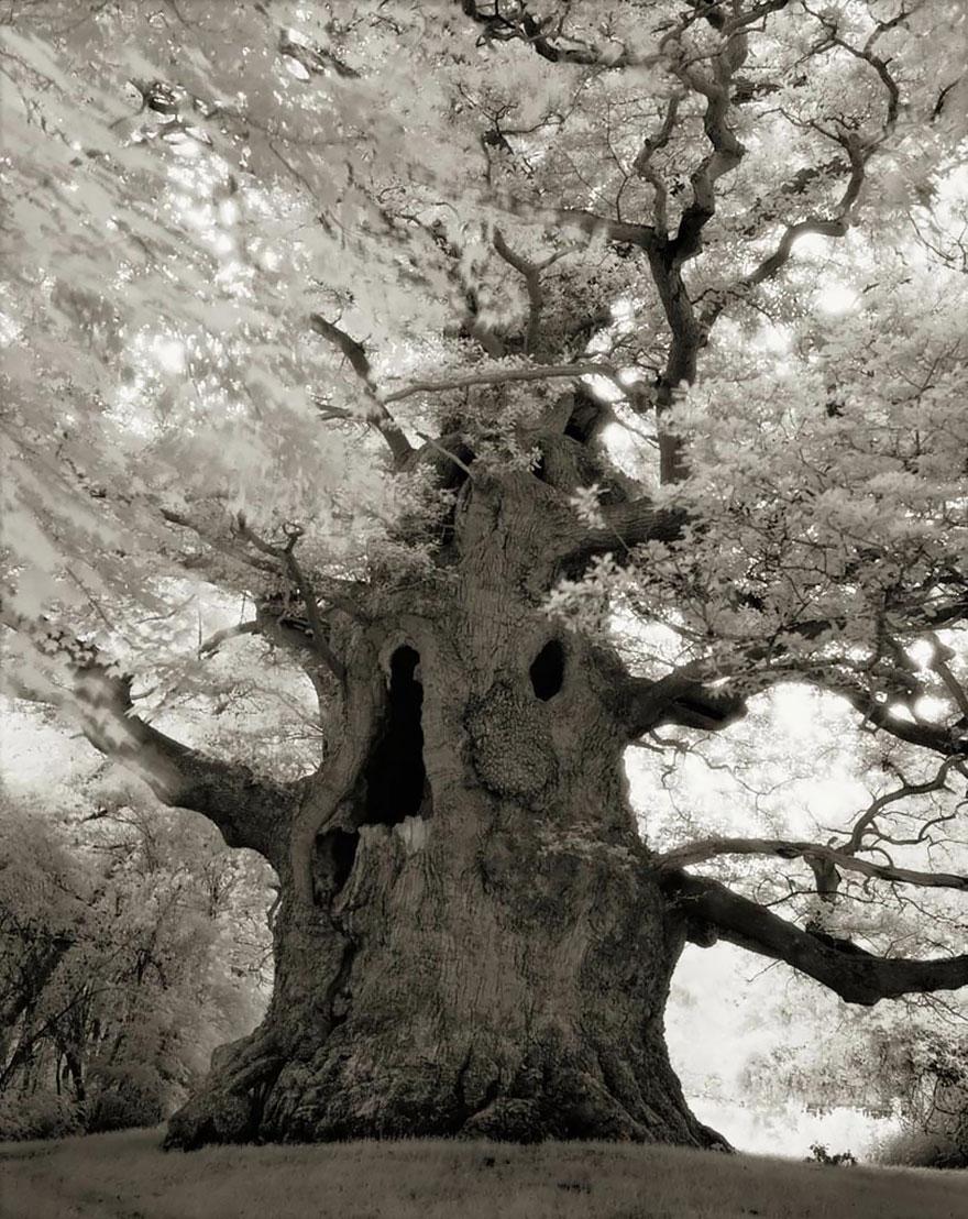 Ancient-Trees-18.jpg