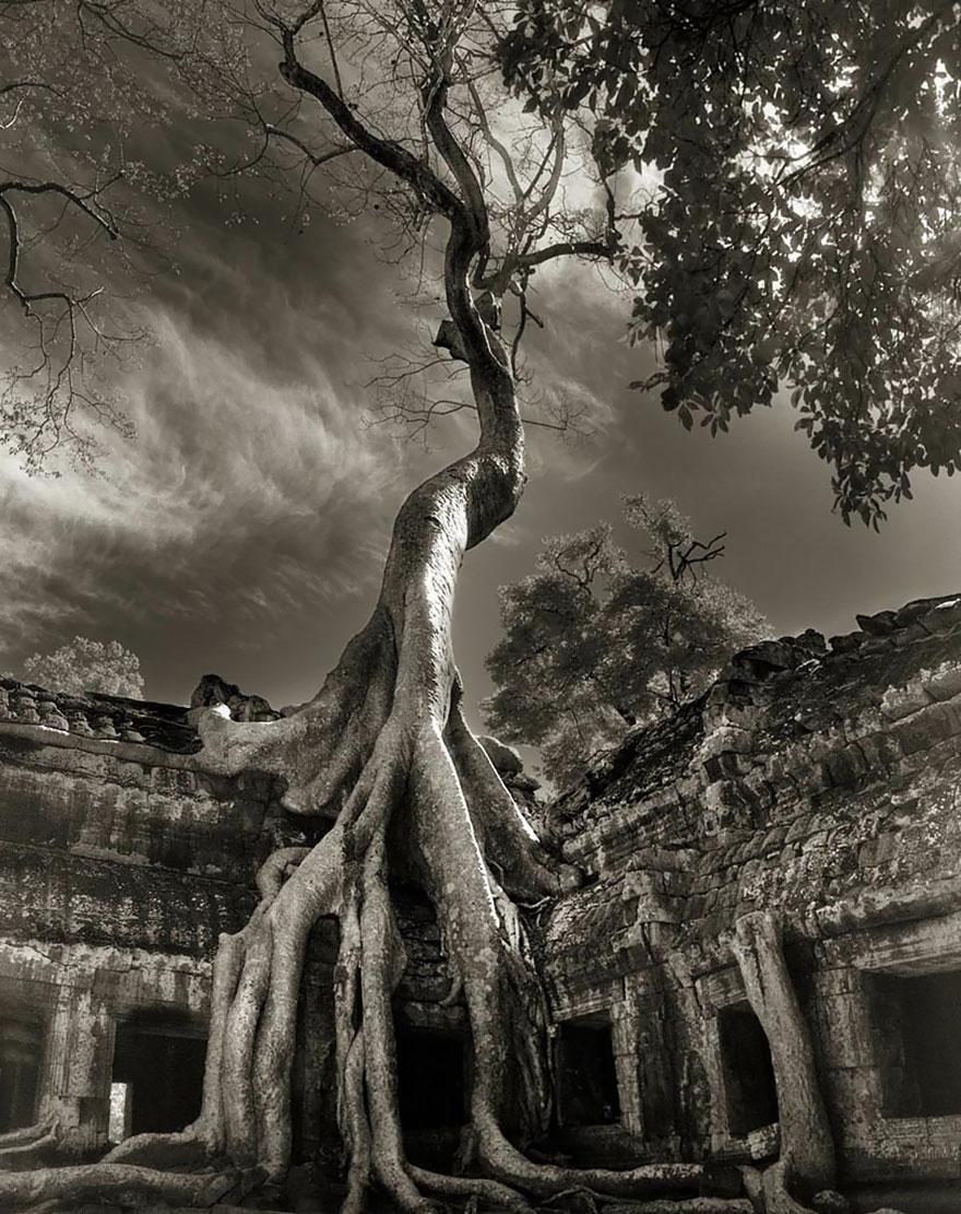 Ancient-Trees-19.jpg