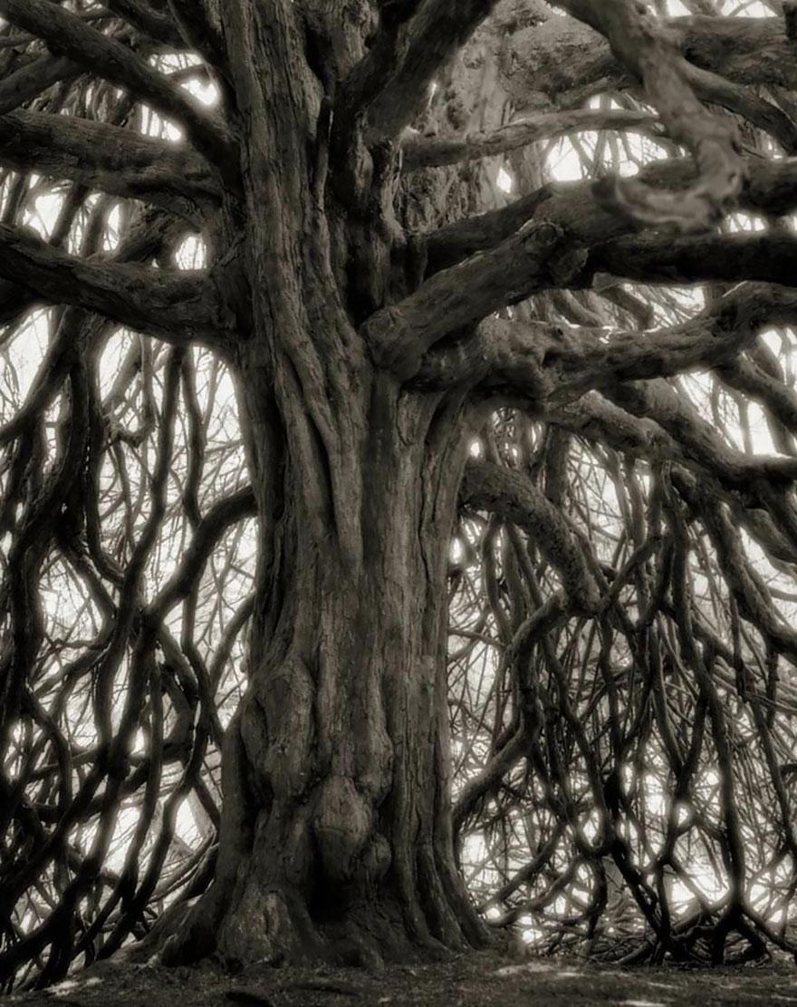 Ancient-Trees-20.jpg