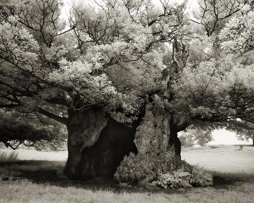 Ancient-Trees-21.jpg