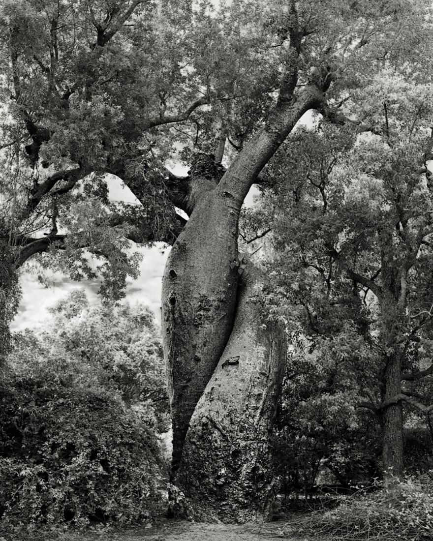 Ancient-Trees-22.jpg
