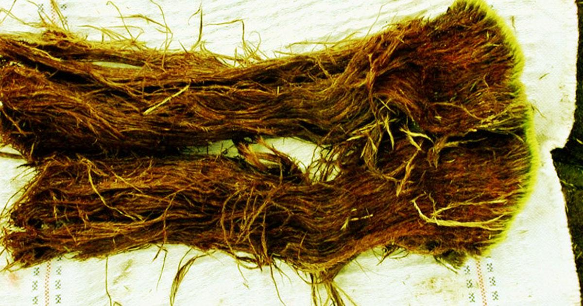 Kus permafrostu, ze kterého se po rozmrazení vyplazili dávní červi.